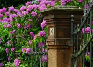 How to Improve Your Home's Curb Appeal this Spring