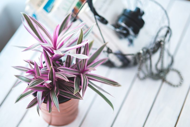 Growing Indoor Plants as Part of Your Decor