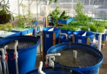 What is Aquaponics and Why Should You Invest in the System
