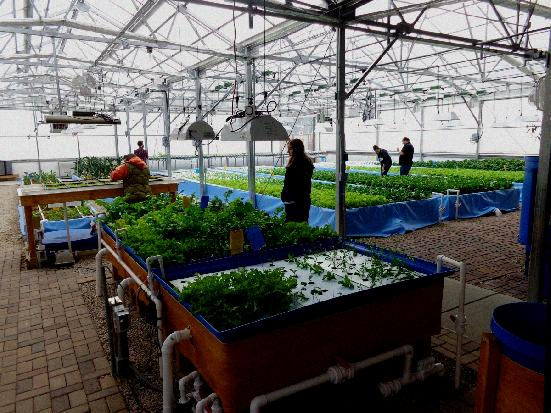 benefit of Aquaponics and Why Should You Invest in the System