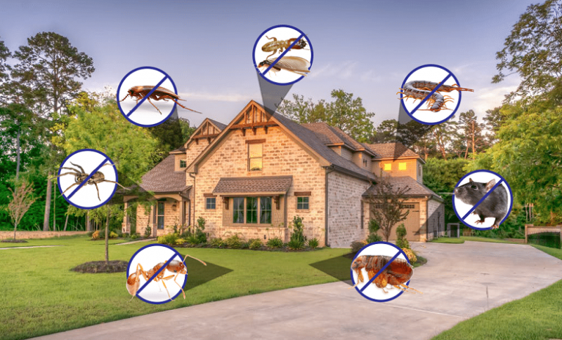 Finding the Best Pest Control Near Me This Winter