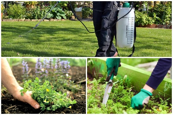 5 Common Weed Control Mistakes and How to Avoid Them