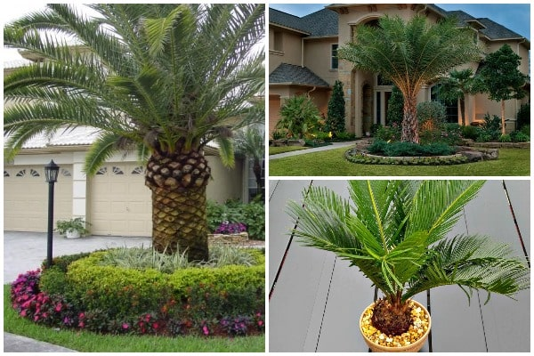 Guide to Planting and Growing Palm Trees-min