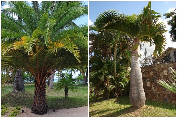 What Are the Best Palm Trees for Home-min