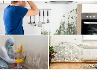 What To Know About Mold Removal