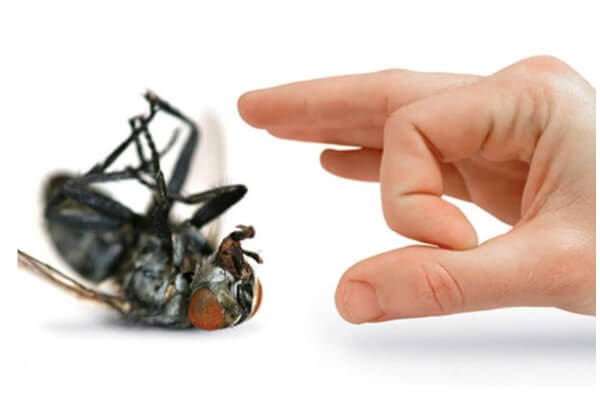 DIY House Pest Control 5 Ways to Bug Proof Your Home