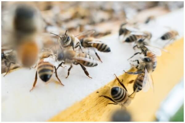 What Are Different Types of Bees That Exist Today