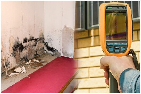 Mould Inspection and Removal